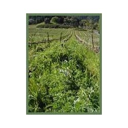 GREEN MANURE - COOL AND...