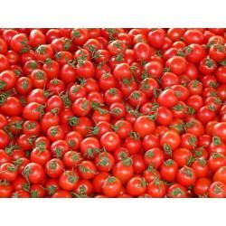 TOMATO - BUSH - AUSTRALIAN RED