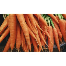 CARROT - WESTERN RED , ORGANIC