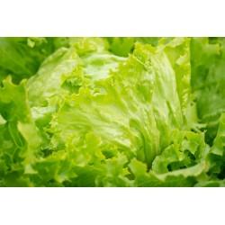 LETTUCE - GREEN ICEBERG