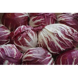 RADICCHIO - TRAVISIO RED...