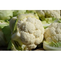 CAULIFLOWER-EARLY JESI