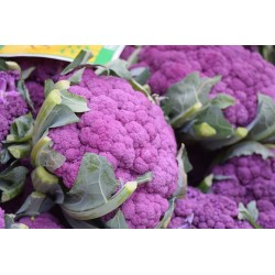 CAULIFLOWER - PURPLE SICILY