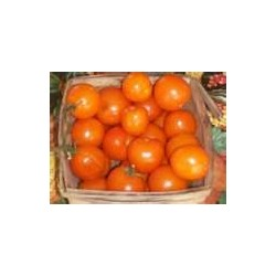 TOMATO - VINE - ORANGE CHERRY