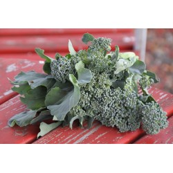 BROCCOLI - SPRING RAAB