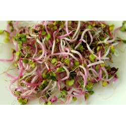 RADISH SEED FOR SPROUTING