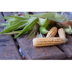 CORN - SWEETCORN - BALINESE...