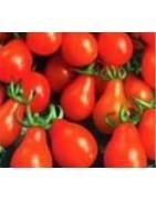 Tomato Seed varieties Heritage Heirloom Organic Bush Vine Coloured
